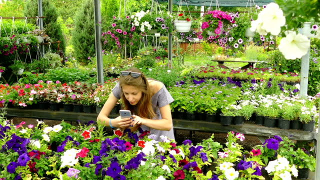 woman takes a smartphone flowers in a greenhouse - photograph stock videos & royalty-free footage