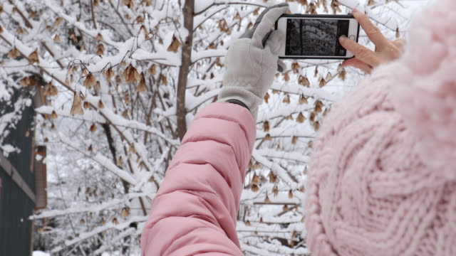 woman takes smart phone pics in snowy forest setting - hat stock videos & royalty-free footage