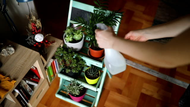 woman taking care of plants - houseplant stock videos and b-roll footage