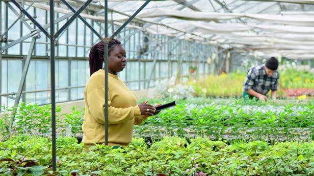 庭の中心で植物の目録を取る女性 - グリーンハウス点の映像素材/bロール