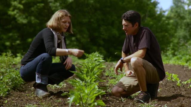 ws woman talking to man as she examining herbs on farm / burlington, vermont, usa - burlington vermont stock videos & royalty-free footage