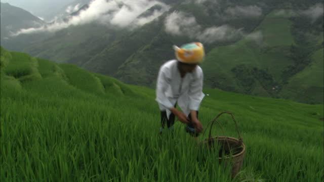 Woman tends to plants on Dragon's Backbone rice terraces