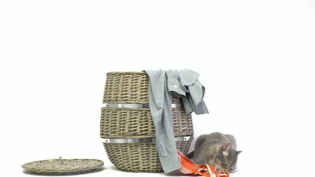woman throwing dirty laundry in laundry basket and playful cat - laundry basket stock videos and b-roll footage