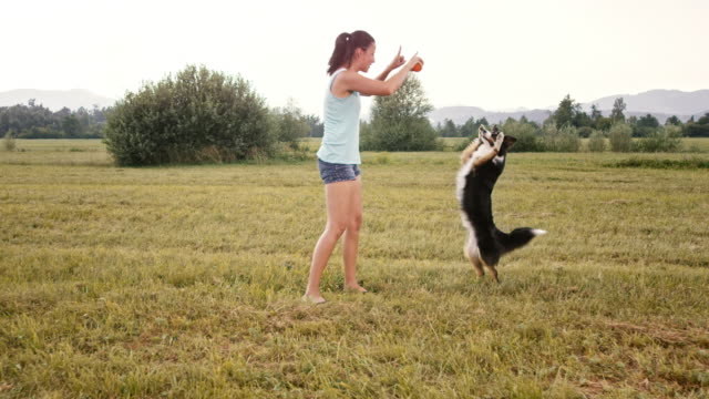slo mo woman throwing her dog a ball in the meadow - throwing stock videos & royalty-free footage