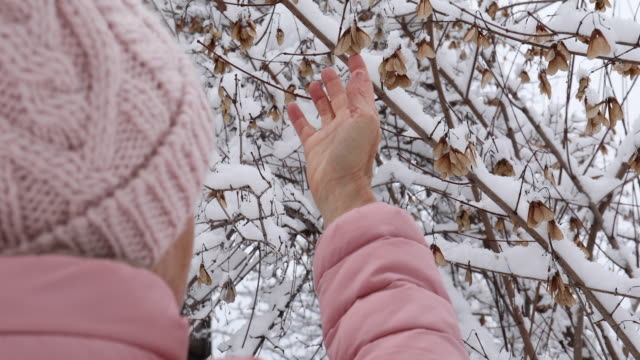 woman touches seed pods in snowy forest setting - plant pod stock videos & royalty-free footage