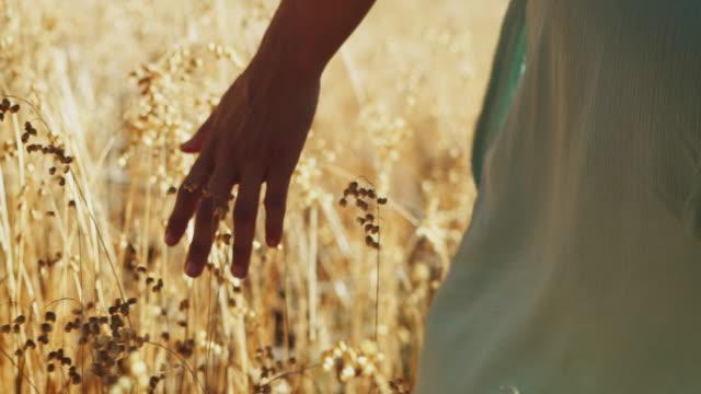 vídeos y material grabado en eventos de stock de mujer tocando flores de prado - environmental conservation