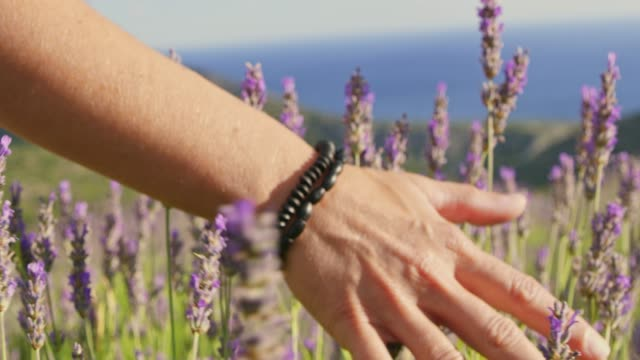 cu slow motion  woman touching lavender in sunny field - bracelet stock videos and b-roll footage