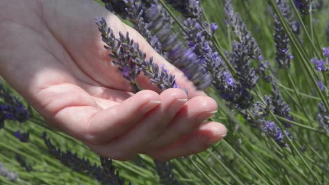 A woman touching lavender