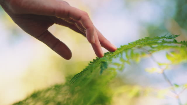 woman touching leafs - fern stock videos & royalty-free footage
