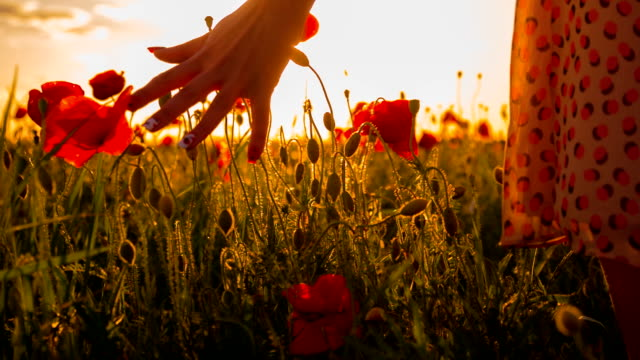 SLO MO Woman Touching Poppy Flowers At Sunset