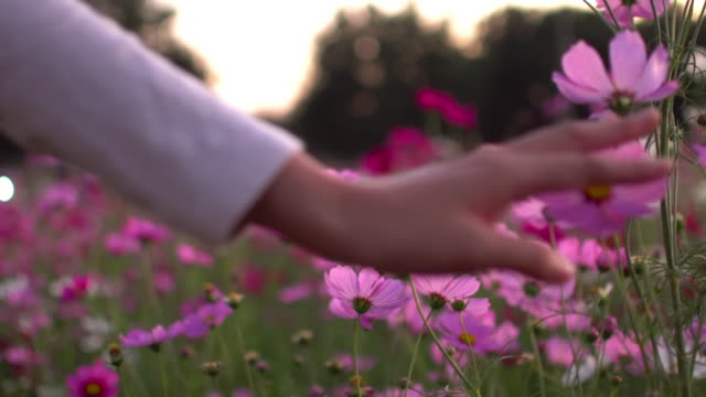 woman touching the cosmos flower - smelling stock videos and b-roll footage