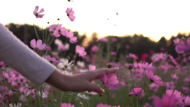 Woman Touching The Cosmos Flower