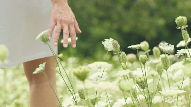 slo mo woman touching wildflower in meadow - serenità video stock e b–roll