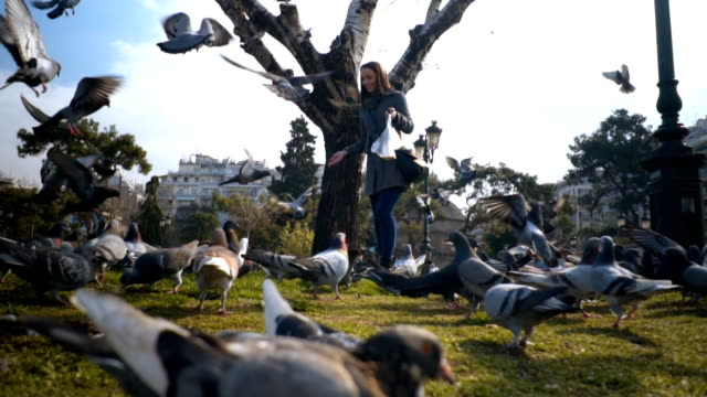 woman tourist feeding pigeons in the park - thessalonika stock videos & royalty-free footage