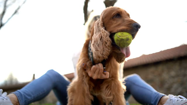 woman training her dog in park - stroking stock videos & royalty-free footage