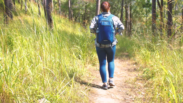 woman traveller exploring in pine tree forest area - named wilderness area stock videos & royalty-free footage