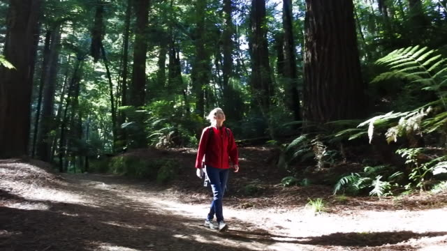 woman travels and hikes alone in giant redwoods forest - riesenmammutbaum stock-videos und b-roll-filmmaterial