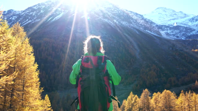 woman trekking in a larches forest in autumn - part of a series stock videos & royalty-free footage