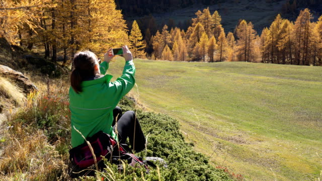 woman trekking in a larches forest in autumn - einzelne frau über 30 stock-videos und b-roll-filmmaterial
