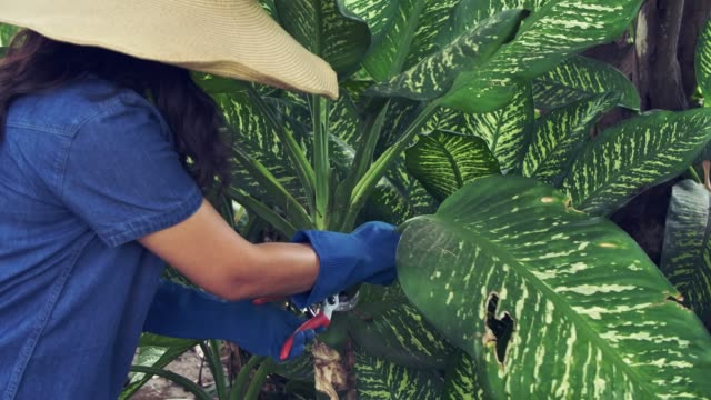 woman trim tropical leaf potted plant in the flowerpod plant care wearing gardening glove and hat hobby leisure activity
