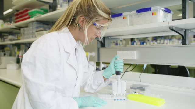 MS A woman uses a multi pipette in a genetics laboratory