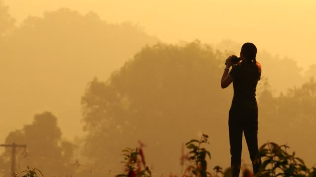 woman using binoculars in the forest at morning - explorer stock videos and b-roll footage