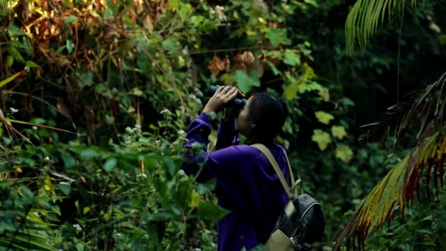 woman using binoculars in the forest, slow motion - canocchiale video stock e b–roll