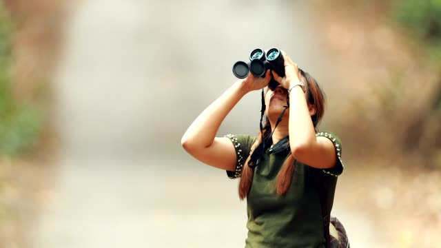 woman using binoculars in the forest - bird watching stock videos & royalty-free footage