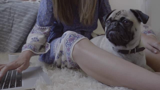 vídeos de stock e filmes b-roll de woman using laptop while stroking pug - grupo mediano de animales