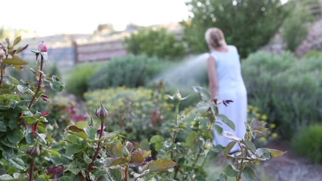 woman using water hose in garden