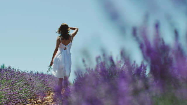 woman walking along lavender plants on field - clear sky stock videos & royalty-free footage