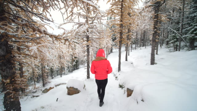 woman walking at pine snow forest - weather stock videos & royalty-free footage