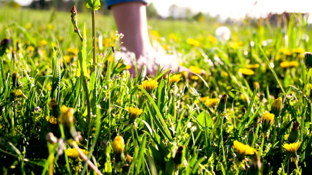 hd super slow-mo: woman walking barefoot in grass - grass family stock videos & royalty-free footage