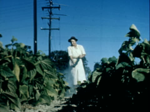woman walking between rows of crops using a pump to spray pesticides on the plants - crop sprayer stock videos and b-roll footage
