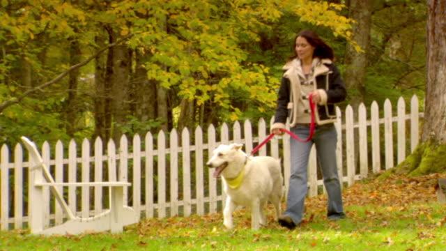 vidéos et rushes de ws, pan, woman walking dog in garden of country house, autumn, phoenicia, new york, usa - femme soumise