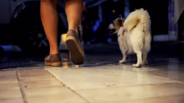 vídeos de stock e filmes b-roll de woman walking dog on leash - trela de animal de estimação