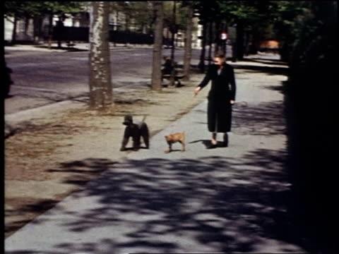 vidéos et rushes de woman walking dogs / black poodle walking - propriétaire d'animal de compagnie