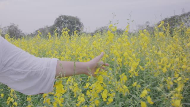 vídeos de stock, filmes e b-roll de mulher andando no campo de sunn hemp flores, 4 mo slo de k - sexo feminino