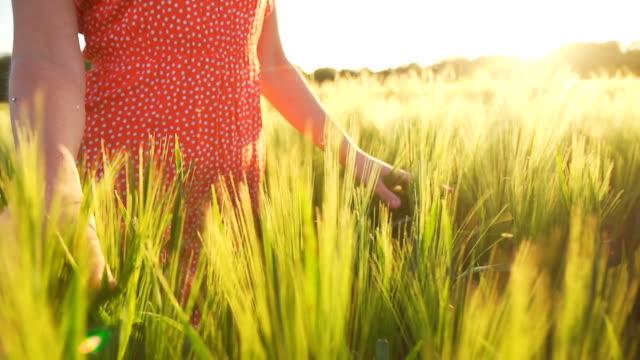 HD SUPER LENT DANS LE MISSOURI: Femme marchant dans le champ de blé