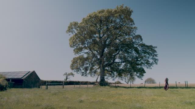 woman walking in pasture - single tree stock videos & royalty-free footage