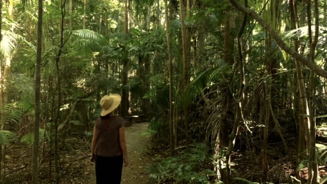 woman walking in subtropical rainforest mary cairncross scenic reserve - zona pedonale strada transitabile video stock e b–roll