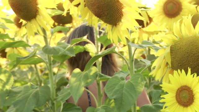 CU Woman walking in sunflower field / Lit-et-Mixe, Aquitaine,  France