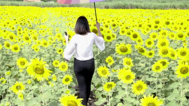 vídeos de stock e filmes b-roll de 4k: woman walking in sunflowers field. - chapéu