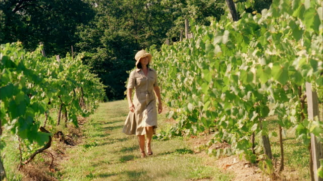ms, woman walking in vineyard, marlboro, new york state, usa - marlboro new york stock videos and b-roll footage