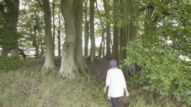 a woman walking into the beech trees on one of the avebury barrows at overton hill - avebury stock videos & royalty-free footage