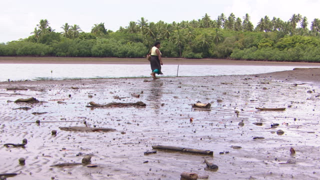 vidéos et rushes de woman walking on tidal estuary area near vunidogoloa fiji where coastal waters are encroaching due to climate change - océan pacifique sud