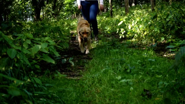 woman walking the dog. - lead stock videos & royalty-free footage