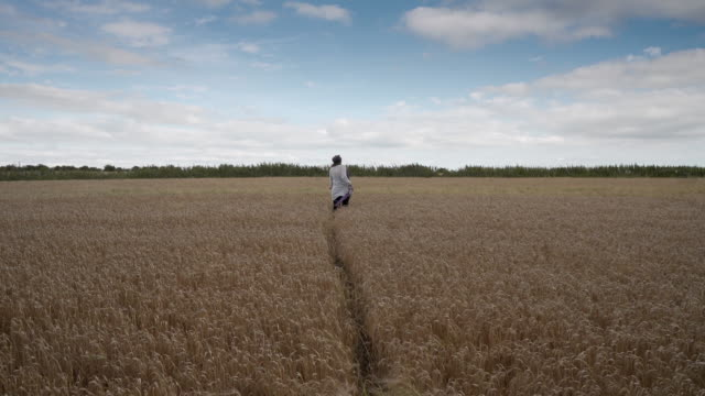 a woman walking through a barley field - diminishing perspective stock videos & royalty-free footage