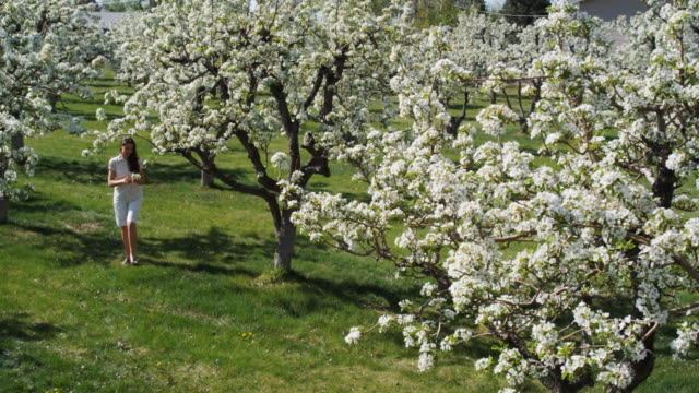 woman walking through a flowering orchard