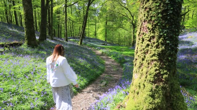 woman walking through bluebells in fishgarths wood, on loughrigg near ambleside, lake district, uk. - footpath stock-videos und b-roll-filmmaterial
